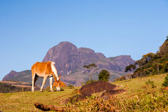 Horse and rocky mountains. In Brazil Royalty Free Stock Photography