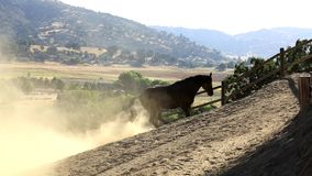 A horse rolling in the dirt. stock video footage