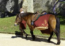 Horse with a Roman mount. Lugo, Galicia/Spain; 06 17 2018; Horse with a Roman mount royalty free stock photography