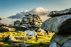 Horse at  Rough Tor Royalty Free Stock Photos