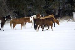 Horse Roundup stock photos