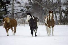 Horse Roundup stock image