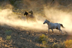 Horse Roundup. Two Cowboys galloping and roping through the desert Royalty Free Stock Photo
