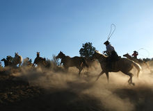 Horse Roundup at Dusk Royalty Free Stock Photography
