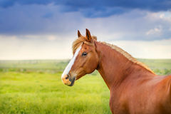 Horse rportrait outdoor Royalty Free Stock Photos