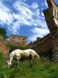 Horse and ruins. Wild horse and ruins of a fortress in Romania Stock Image