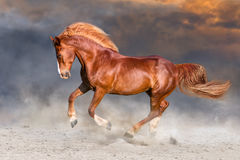Horse run in desert. Red horse with long blonde mane run on desert dust stock photos