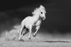 Horse run desert Royalty Free Stock Photos