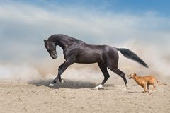 Horse run with dog