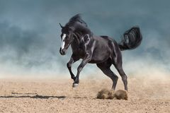 Horse run in dust
