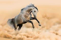 Horse run in dust royalty free stock photos
