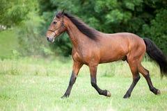 Horse run free on pasture