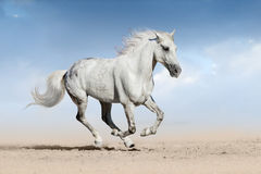 Horse run gallop Stock Photo