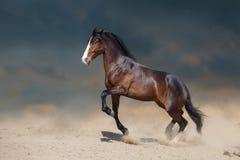 Horse run gallop in desert