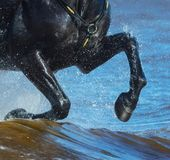 Horse run gallop on water. Legs of horse close up with splashes. Black horse run gallop on water. Legs of horse close up with splashes Royalty Free Stock Photo