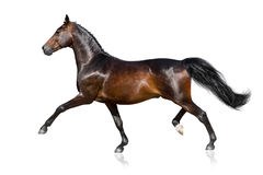 Horse run isolated Royalty Free Stock Image