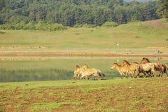 Horse run Royalty Free Stock Photos