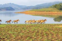 Horse run Royalty Free Stock Photography