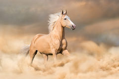Horse run. Palomino horse with long blond male run in dust stock images