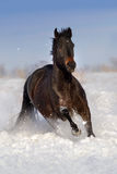 Horse run on snow Stock Images