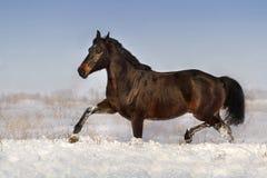 Horse run on snow Royalty Free Stock Photo