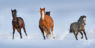 Horse run in snow Royalty Free Stock Images