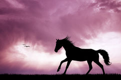 Horse run at sunset Royalty Free Stock Images