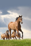 Horse running Stock Photos