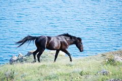 Horse running. In the pasture Royalty Free Stock Image
