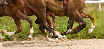 Horse Running Royalty Free Stock Photo