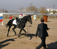 A horse running away after a sportsman fell off Stock Images
