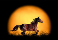 Horse running on the background of sunset. Large sun on a dark background Stock Image