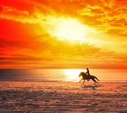 Horse running on a beach Royalty Free Stock Photography