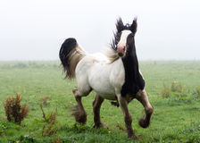 Horse running Royalty Free Stock Images