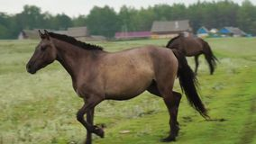 Horse running through the field stock video footage