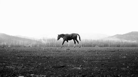 Horse running Royalty Free Stock Photography