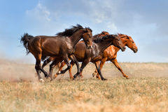 Horse running gallop royalty free stock photos