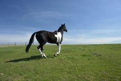 Horse Running In Pasture Stock Photo