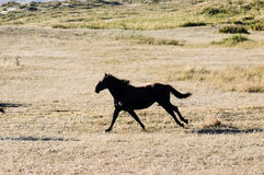 Horse running Stock Images