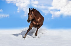 Horse running in snow Stock Image