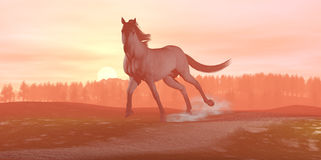 Horse running on sunset background Stock Photography