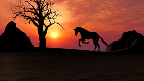 Horse Running under Sunset in the Desert Royalty Free Stock Photo