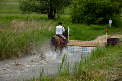 Horse running through water in a cross country race. Royalty Free Stock Photography