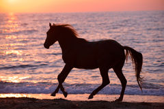 Horse running through water Stock Images
