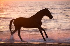 Horse running through water Royalty Free Stock Images