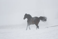 Horse running in winter Royalty Free Stock Photos