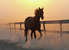 The horse runs  against dust Royalty Free Stock Images