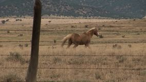 Horse runs behind the fence over prierie stock footage