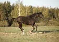 Horse runs gallop on fog field Stock Photo