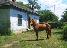 Horse and rural court Stock Image